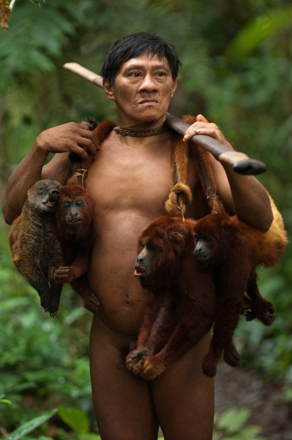 SPECTACULAR images offering insight into the lives of the Huaorani people in the Ecuadorian Amazon have been revealed showing how they use traditional methods to hunt monkeys for food. The collection of pictures show people with dead monkeys hanging around their necks and another person in the trees in action trying to catch their next meal with a blow gun. Other shots show a man creating an ornate headpiece and woman knitting a hat. Other shots offer further insight into what the people eat with bare toucans, the bird made famous through advertising the Irish stout Guinness, hanging from their necks and a peccary pig roasting on an open flame. The stunning pictures were taken by conservation photographer, Pete Oxford (58) from Torquay, Devon in the Ecuadorian Amazon. To take his shots, Pete used a Nikon camera. Pete Oxford / mediadrumworld.com