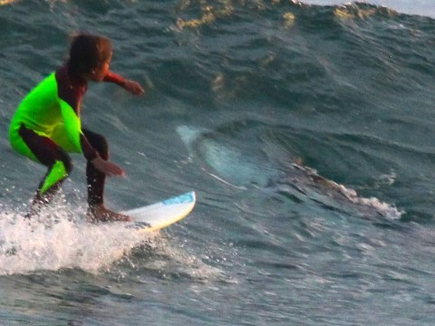 Boy, 10, surfs over massive great white shark as dad watches from shore