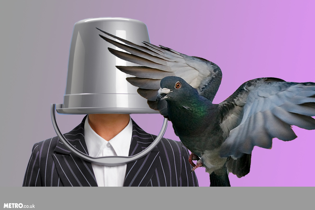 Man breaks into store with bucket on his head to steal expensive pigeons