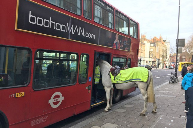 Does that horse have an Oyster card? (Picture: Twitter/Simon Crowcroft)