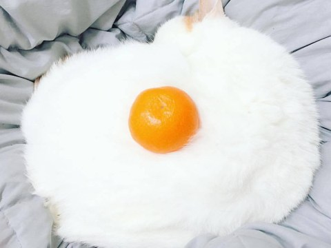 A fluffy white cat with an orange has sparked the ultimate Photoshop battle