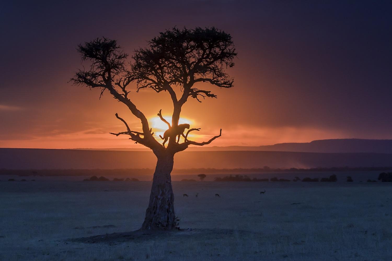 cheetah-at-sunset-olare-conservancy