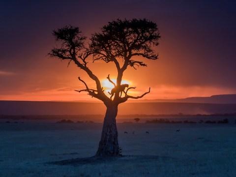 5 tips for capturing amazing wildlife photographs