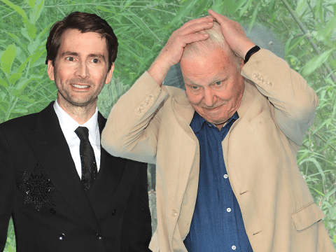 Has David Attenborough got competition? Spy In The Wild viewers are loving David Tennant's voice
