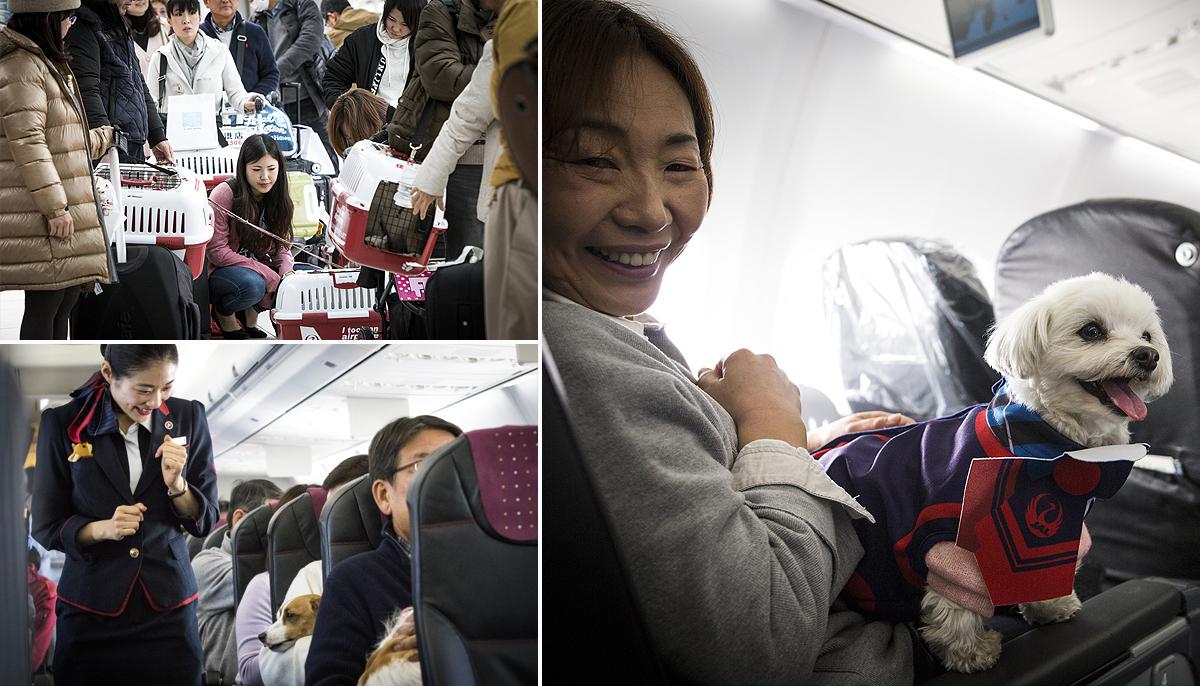 Pets on board plane