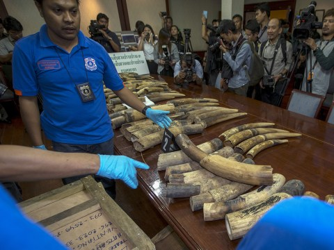 UK ivory sale petition to be debated in parliament after hitting 100,000 signatures