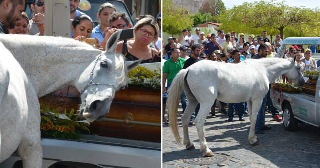 The heart breaking moment a horse cries at his owners funeral has been caught on camera.