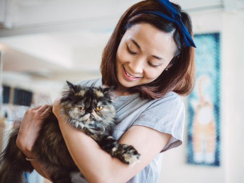 No, having a cat does not cause mental illness