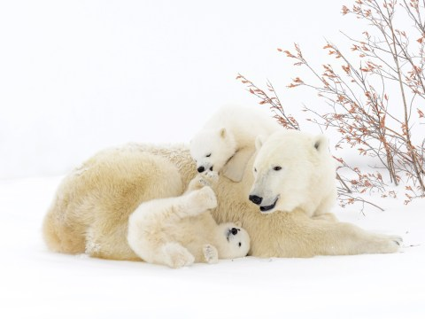 International Polar Bear Day 2017: 20 cute and cuddly reasons to celebrate