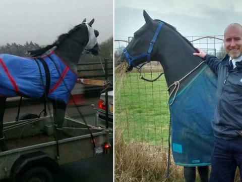 Someone called the RSPCA to rescue a plastic horse