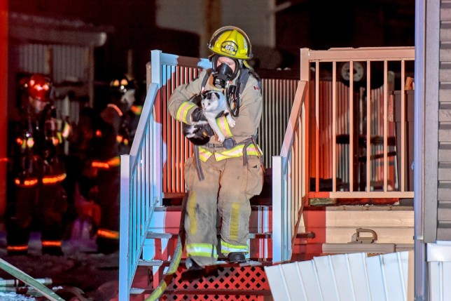 Cat Bit Her Owner In Her Sleep To Save Her Family From A House Fire (Picture: William Vavrek Photography)