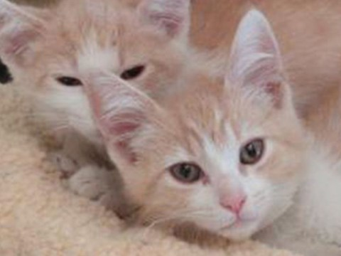 These long-lost cat brothers were reunited when their owners fell in love on Tinder
