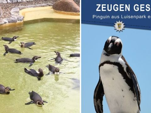 Penguin 'stolen' from zoo in Germany could die if it isn't returned quickly
