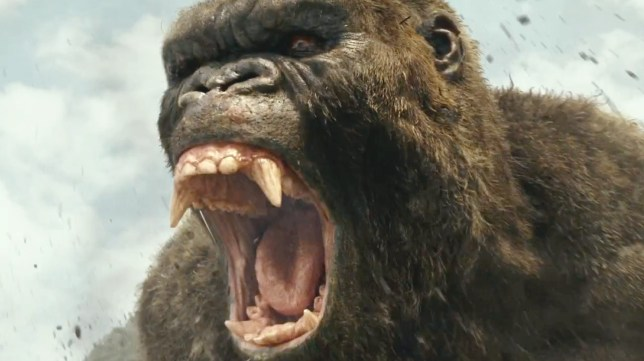 King Kong returns in Kong: Skull Island (Picture: Warner Bros)