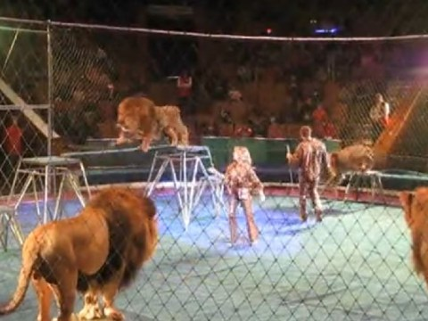 Circus trainer attacked by lions in terrifying video
