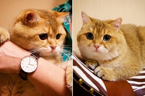 (Picture: @hosico_cat)
