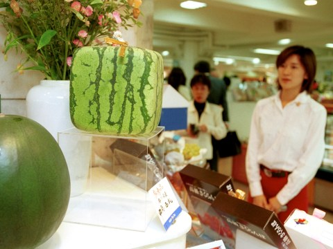 People are paying thousands of pounds for square watermelons and 'luxury fruit' in Japan