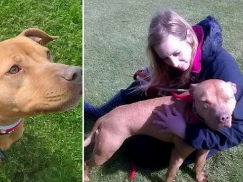 'Friendly' dog to be put down despite family wanting to adopt her