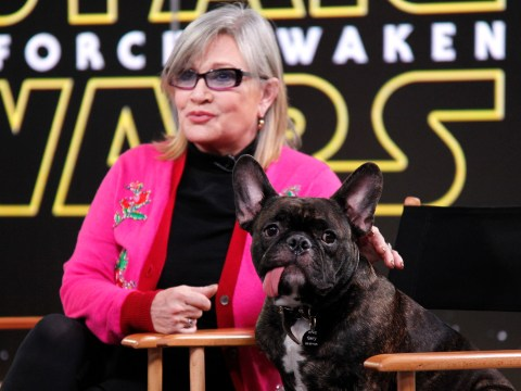 Carrie Fisher's dog Gary pooed on the floor and showed no remorse at A Star Wars Celebration