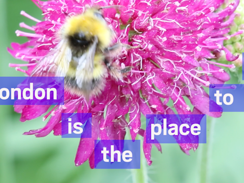 London is the place to bee: Why bees in our capital are thriving