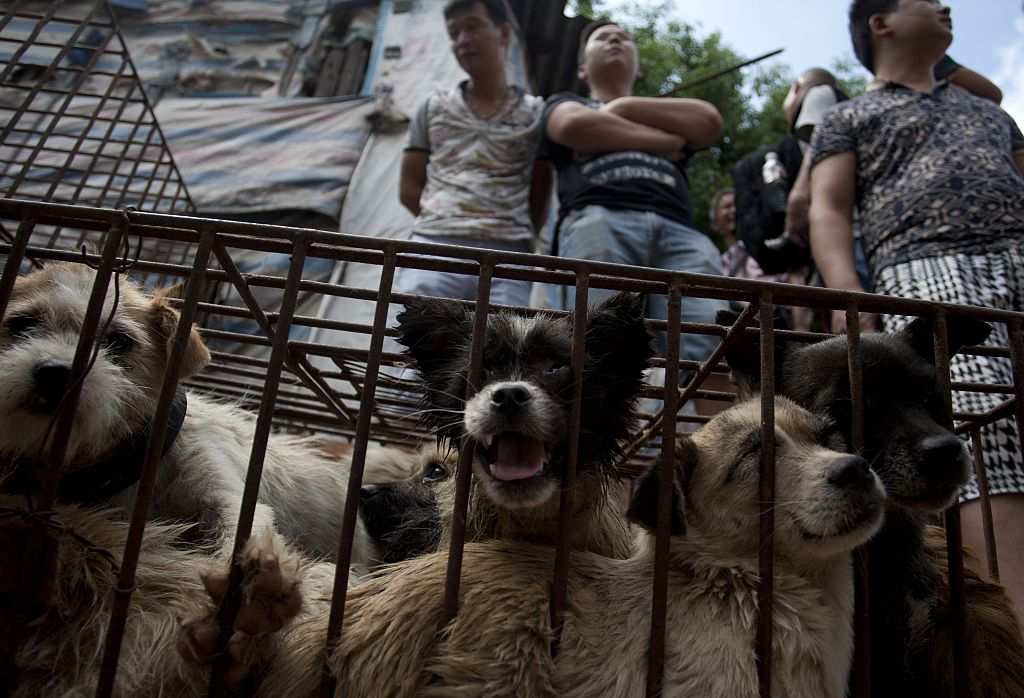 Dog meat to be banned at notorious Yulin dog meat festival