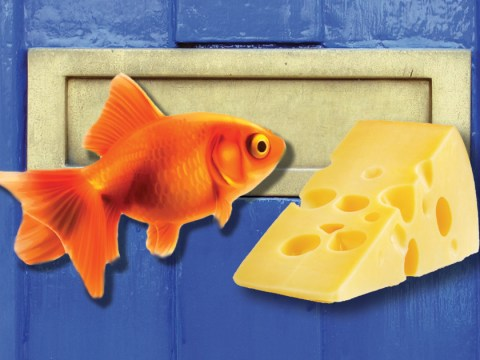 Goldfish covered in cheese and posted through letterbox in neighbour's dispute