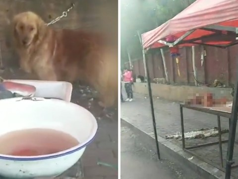 Butcher killed 12 dogs when animal lovers couldn't pay a ransom