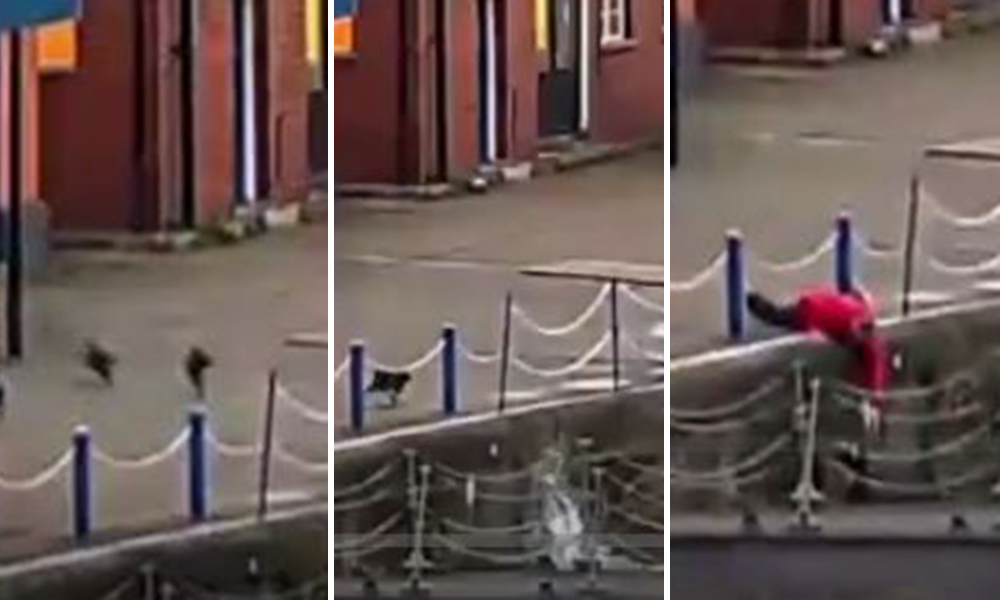 Hero rescues cat who fell into the Thames