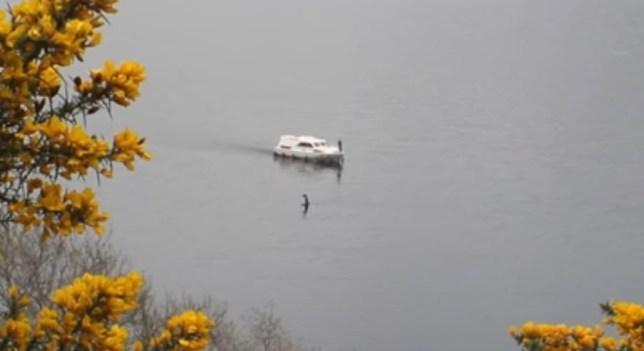 Loch Ness Monster Video Emerges Nessie May Not Be Dead After All