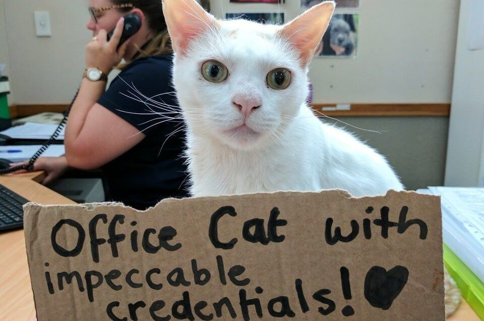 Cat becomes receptionist after waiting more than 400 days to be adopted