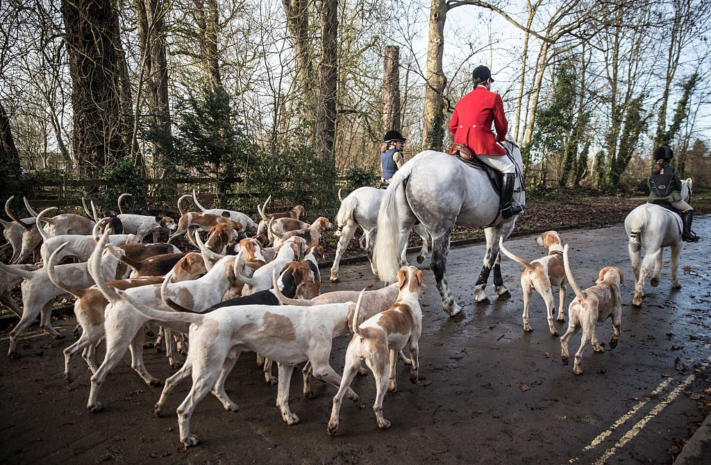 Pro-hunt Tories hoping to repeal hunting ban 'are wasting their time'