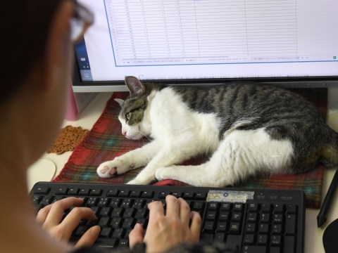 These office workers in Japan get to play with cats all day and now we're looking at work visas