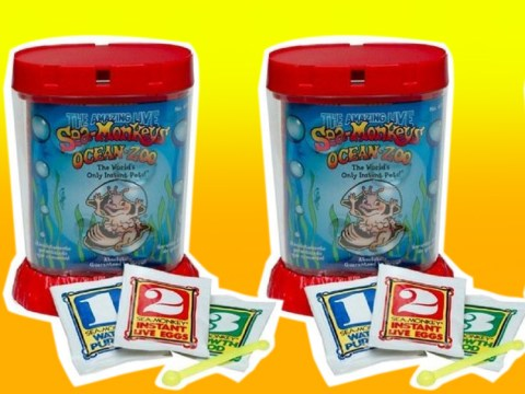 National Sea Monkey Day: 21 novelty crazes that all 90s kids remember