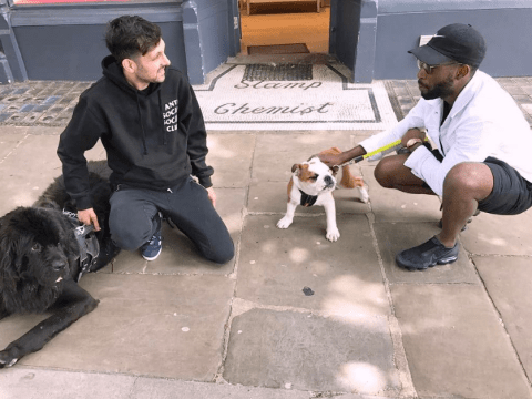Tinie Tempah and Dynamo are dog walking buddies because the world's full of surprises