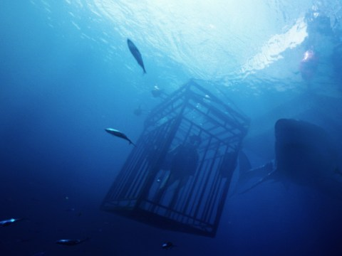 47 Metres Down review: Better than your average summer horror flick – though not by much