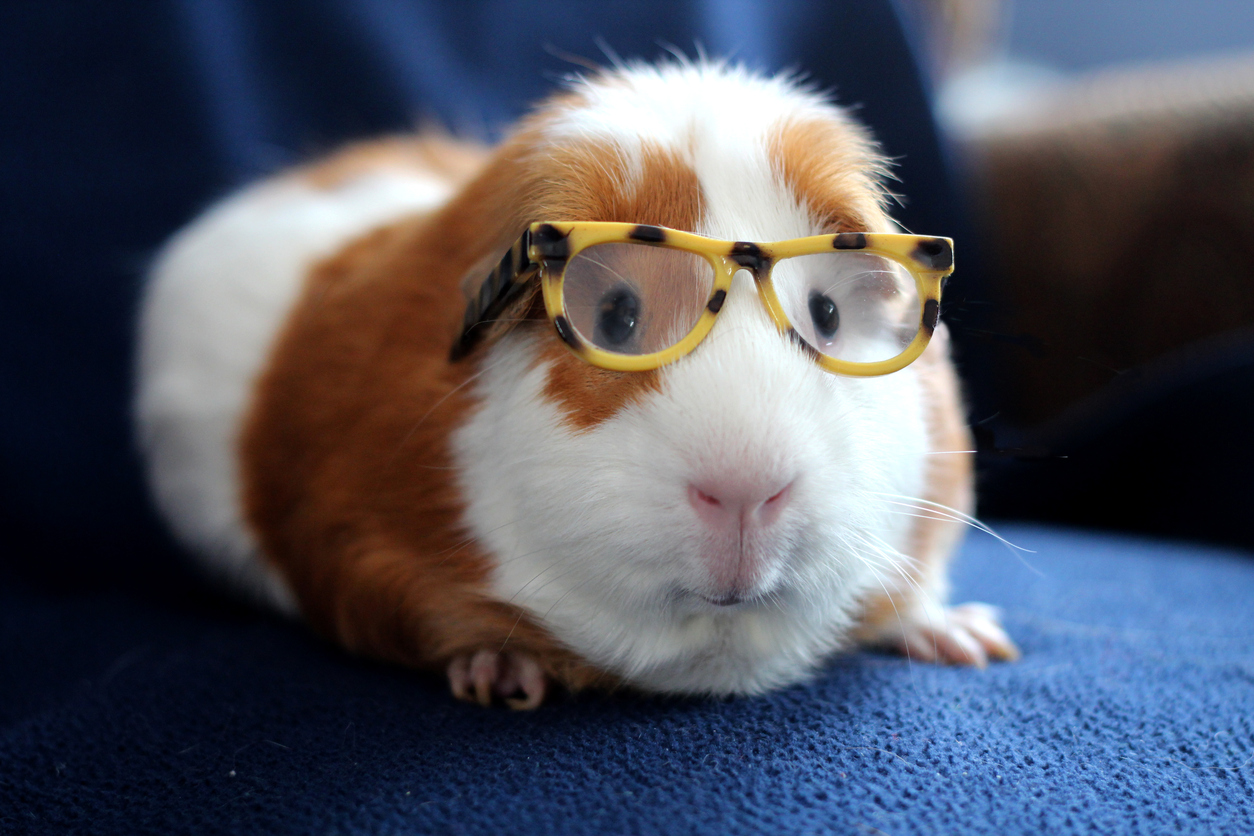 What happens if you let a robot name your guinea pigs