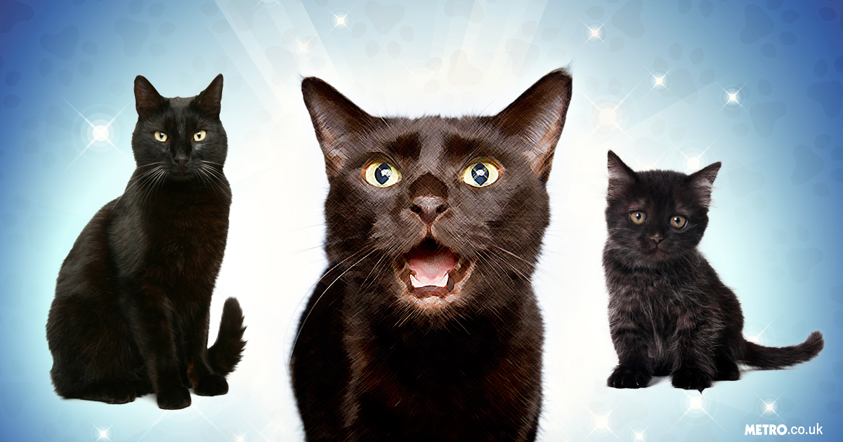 Black cats are the best cats ever and you're wrong if you think any different