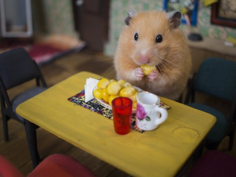 Someone made an entire tiny town just for hamsters