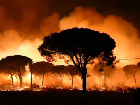 Thousands forced to evacuate as wildfire rips through Spanish national park