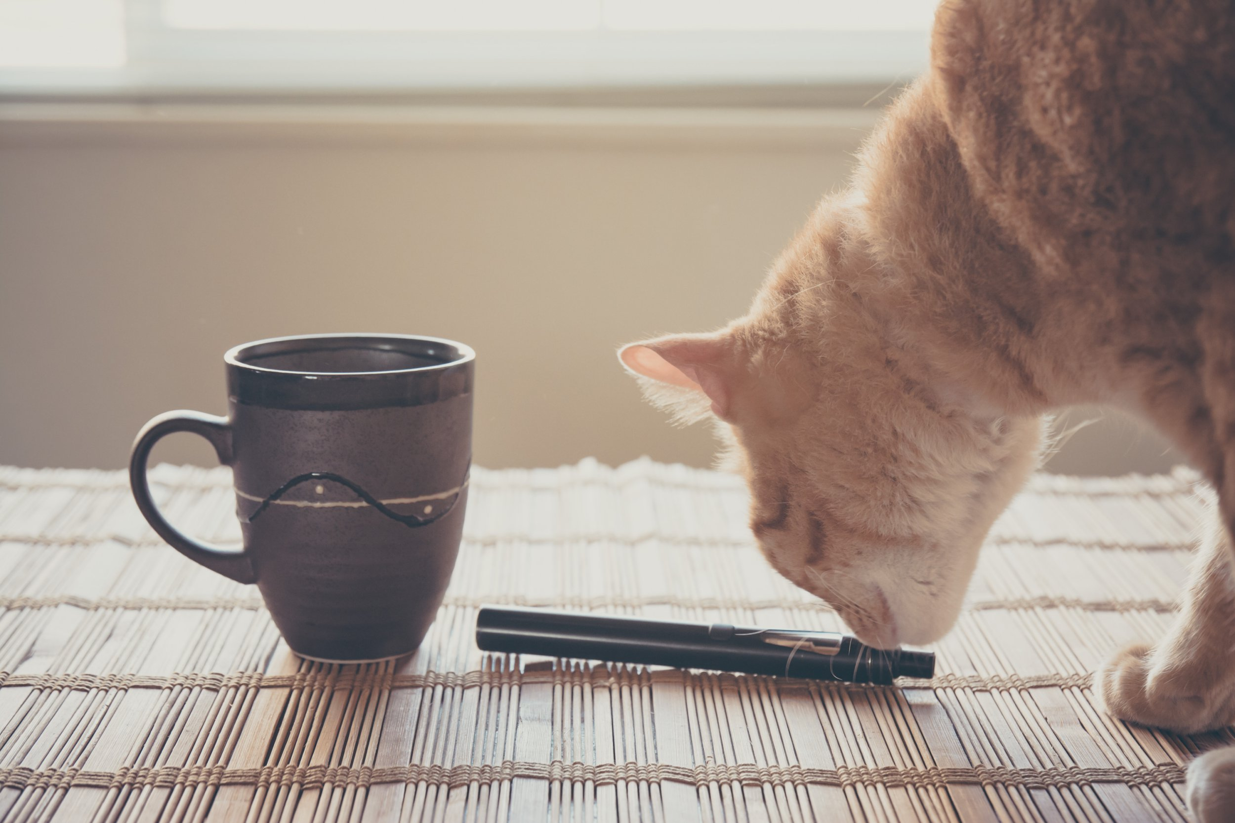 Vaping 101: Can you vape around your pets?