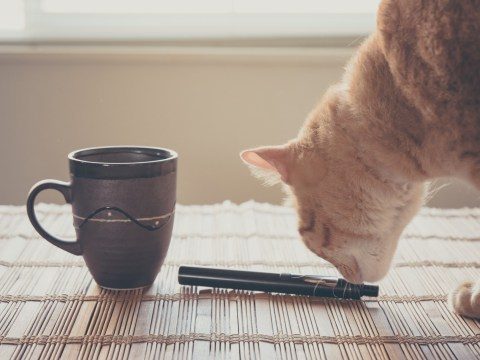 Vaping 101: Can you vape around your pets?