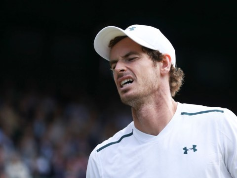 Andy Murray admits he's been in pain throughout Wimbledon after Sam Querrey defeat