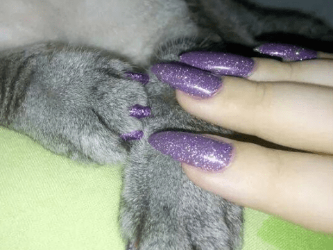 Dog owners are giving their pets matching manicures and we are not okay with it