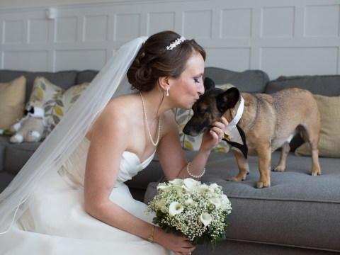 Dream job alert: This woman pet-sits dogs at weddings