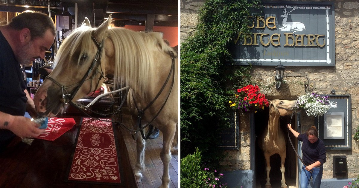 A horse walked into a bar…and it's not a joke