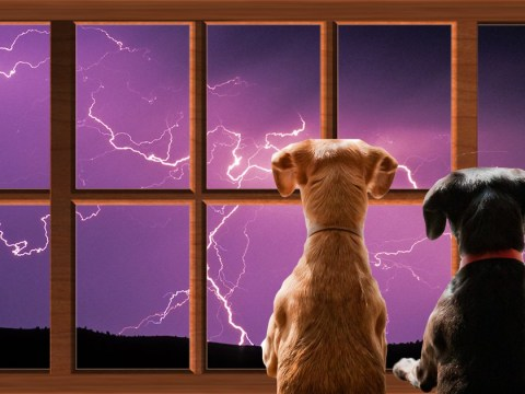 How to look after your pets in thunder and lightning