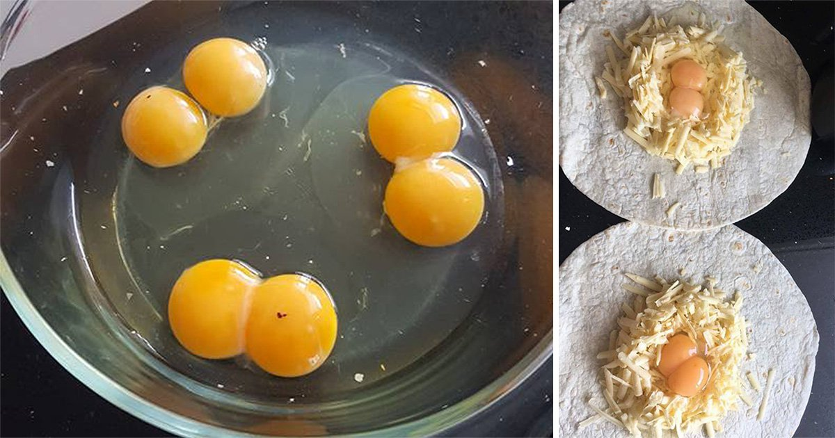 Family beat odds of one in a nonillion to find a whole box of 10 eggs with double yolks
