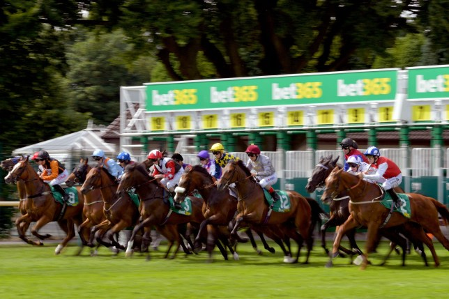Northern Ireland student sues bet365 over missing horse