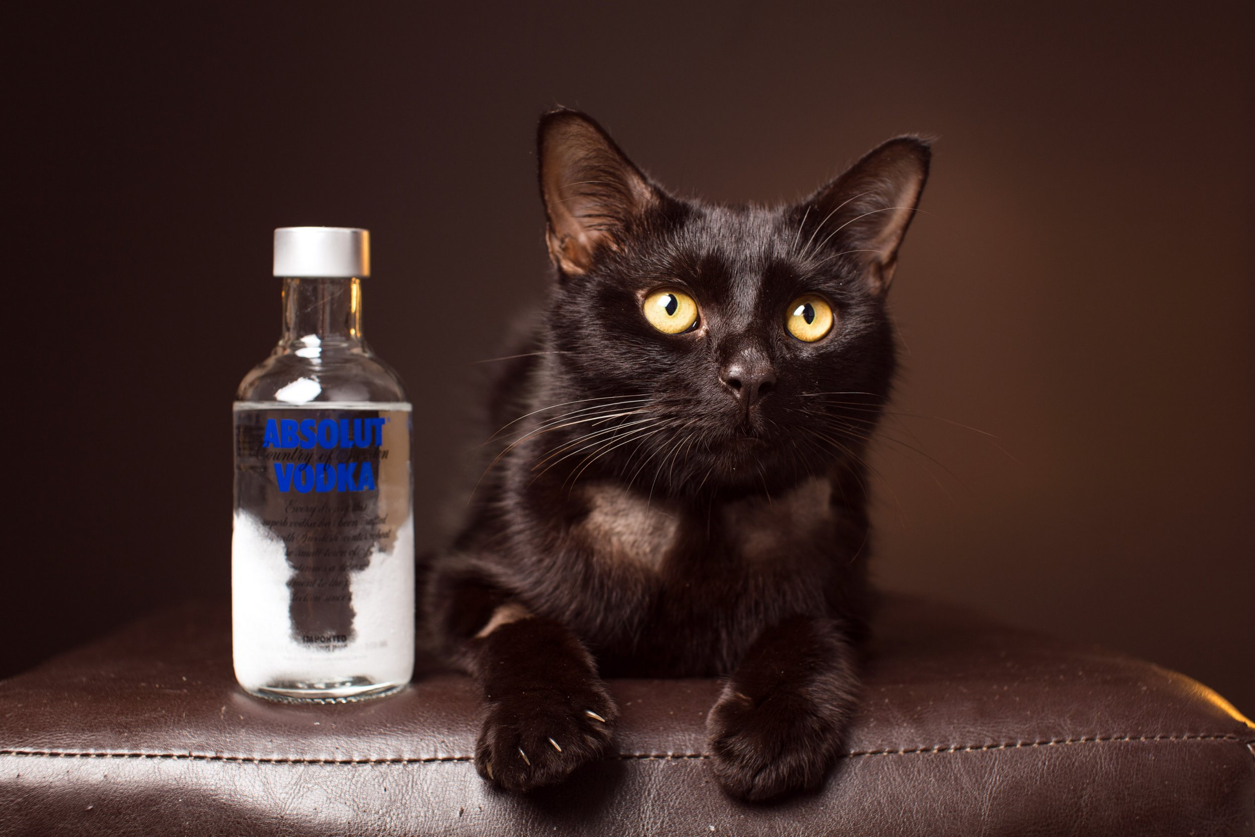 Vets save poisoned cat's life by giving him a bottle of vodka to drink