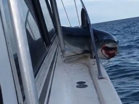 Huge shark jumps on board boat and thrashes around with bloodied mouth